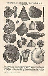 B0219 Petrefakten Der Mesozoischen Formationsgruppe - Xilografia_1902 Engraving