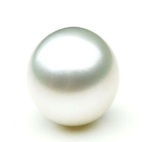 $899 Pacific Pearls® AA+ 13.6mm Australian South Sea Pearl Loose Pearl
