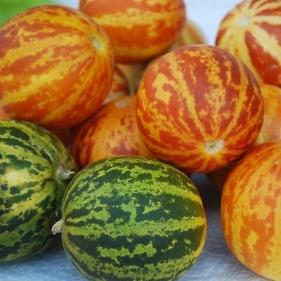 QUEEN ANNE'S POCKET MELON OR PLUM GRANNY 25 SEEDS GIVE THEM A TRY THEY'RE LOVELY