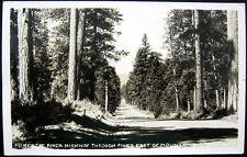 KLAMATH FALLS OR~1930's McKENZIE RIVER HIGHWAY THROUGH PINES ~ RPPC