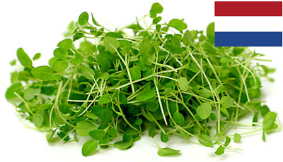 10 G HERB GARLIC CHIVES Seeds Sprouting Organic 2100+ Microgreens Anticancer