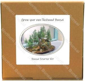 Bonsai Tree Kit Personalised Redwood Grow Your Own Tree Gift Set Starter Kit Uk Ebay