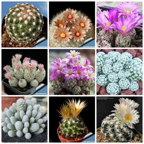 20 seeds of Escobaria Mix,seeds cacti mix succulents seeds mix   C