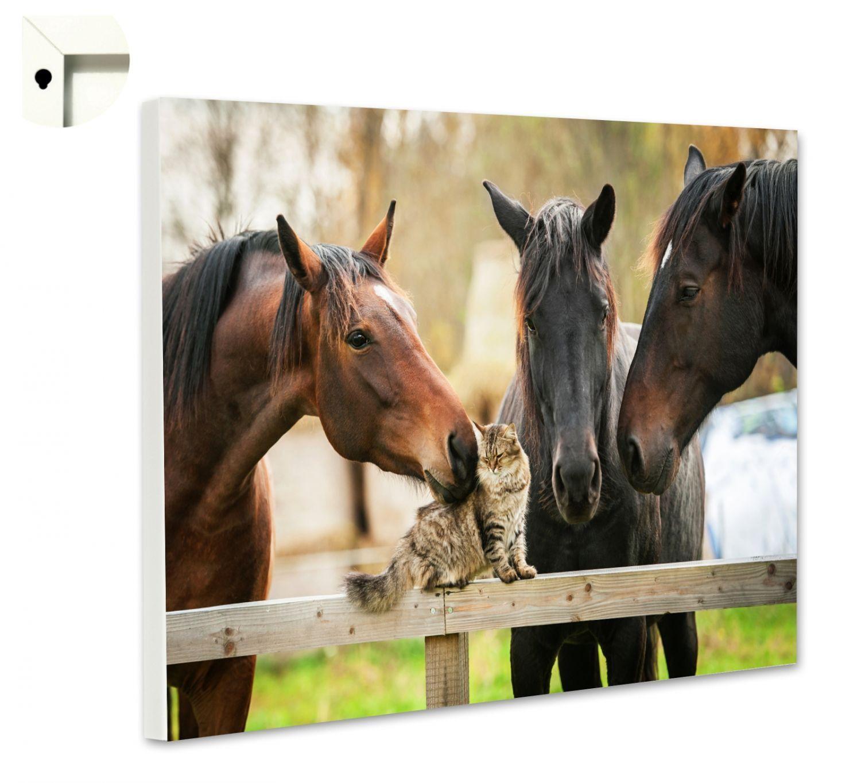 Magnettafel Pinnwand Memoboard Motiv Tiere Pferde & Katze