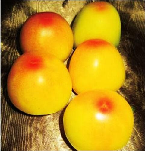 20 Yellow Tomato Seeds Red Bottom Lycopersicon Esculentum Organic Vegetable