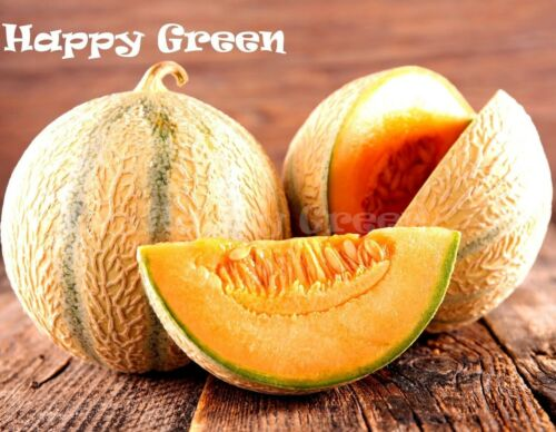 MELON CHARENTAIS 30 SEEDS FREE UK P/&P ** VEGETABLE Cantaloupe melon