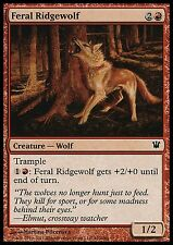 Feral Ridgewolf X4 EX/NM Innistrad MTG Magic Cards Red Common