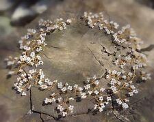 "Hair Vine Tiara crown bridal bridesmaids baby's breath Gold toned wire 15"" UK"
