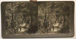 Giappone-Foresta-Glade-Miyanoshita-Foto-Stereo-P49p1n-Vintage-Citrato-1901