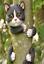 Novelty-Resin-Garden-Tree-Hugger-Peeker-Animal-Fairy-Ornament-Outdoor-Fence-Shed thumbnail 10