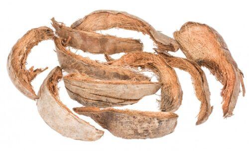 Pedazos de NaDeco® coco cáscara natural aprox 20-30 cm 10Cáscara de cocoCorteza de coco