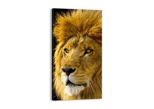 BILD LEINWAND Wandbild Löwe Tiere Tierwelt 1237 DE