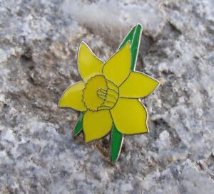 Beautiful-Narcissus-Yellow-Daffodil-Spring-Flower-Bloom-Pretty-Brooch-Pin-Badge