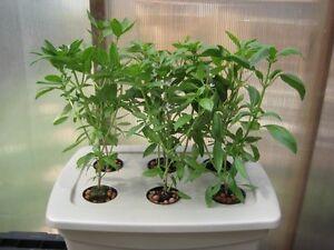 Drip Hydroponic System 6 Site W Nutrients Fertilizer