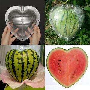 Hasil gambar untuk fruit mould