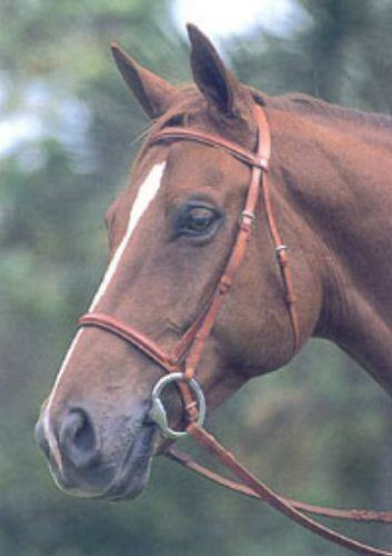 Courbette Narrow Ultra Raised Bridle by Lemetex AG, Horse Size, Newmarket Brown