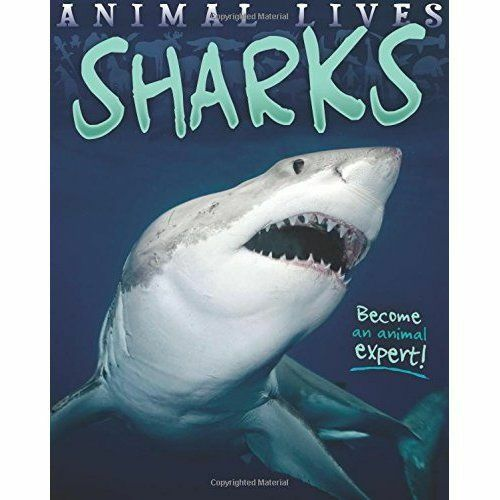 Very Good Morgan, Sally, Animal Lives: Sharks, Paperback, Book