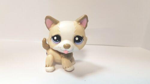 petshop authentique chien dog husky 1817  pet shop lps