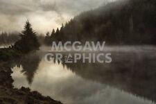 LANDSCAPE PHOTO ART PRINT Clearing by David Lorenz Winston TREES POSTER 13x19
