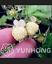 Pineberry Bonsai 500 Pcs Seeds Garden Fruits And Vegetable White Berries NEW R U