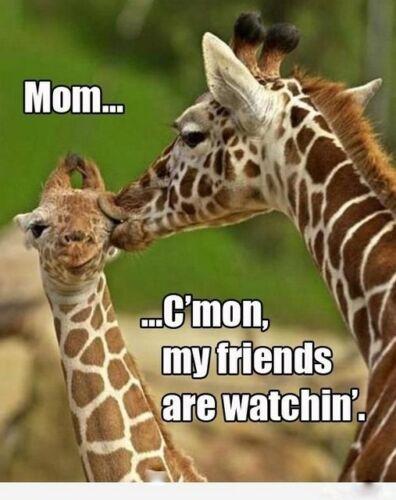 "Funny  Giraffe  refrigerator magnet 2 1//2x 3  1//2 /"""