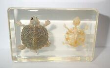 Turtle & Turtle Skeleton Set Red-eared Slider clear Education Animal Specimen