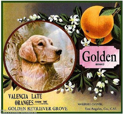 Marshall Canyon Golden Retriever Dog Orange Citrus Fruit Crate Label Art Print