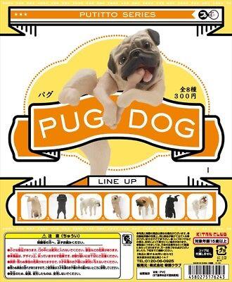 Kitan Club PUTITTO Series Pug Dog Animal Collection Caught Fawn Figure