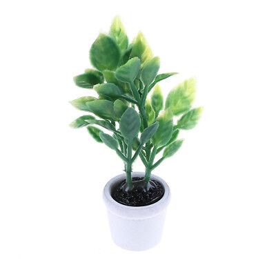 Nuevo 1//12 planta Verde En Maceta Blanco Casa de Muñecas en Miniatura Accesorio De Jardín XH