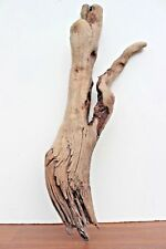 Schwemmholz  Treibholz  Driftwood  1 Wurzel   Hölzer  Terrarium   Garten