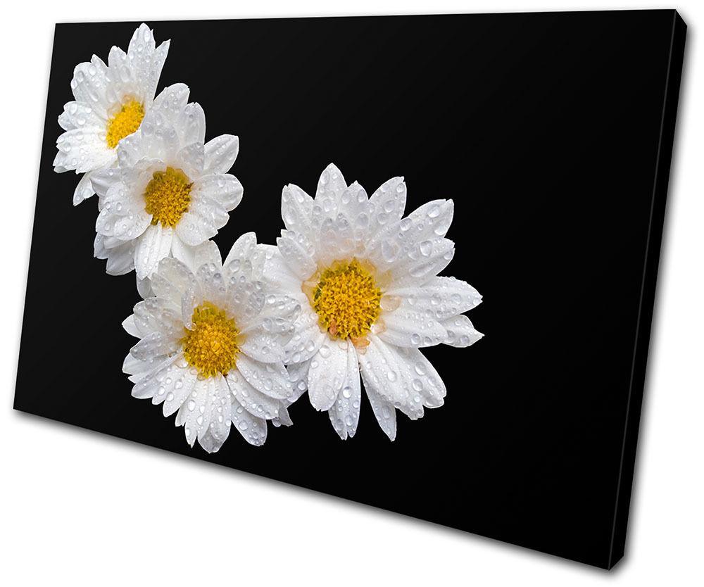 Floral Daisies SINGLE TELA parete arte foto stampa