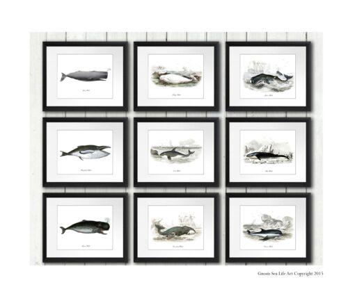 Beach Decor Wall Hanging Set of 9 Whale Poster Prints Bathroom Wall Art