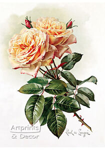 Two-Yellow-Roses-by-Paul-de-Longpre-Art-Print-of-Vintage-Art
