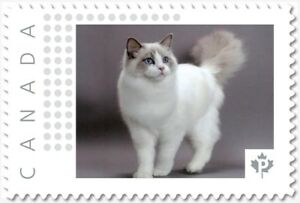 RAGDOLL CAT exotic breed Personalized Postage stamp MNH Canada 2018 p18-06sn11