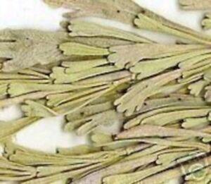 die-Pflanze-aus-denen-Indianer-Raeucherwerk-gewinnen