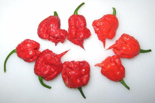 Carolina Reaper Piment X 5 graines SUPER CHAUD-liveseeds