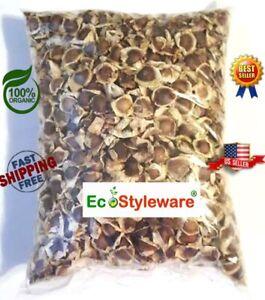 Moringa-Seeds-Organic-1000-Seeds-Semillas-de-Moringa-PKM1-Indian-Origin
