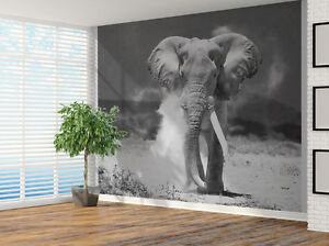 Black And White Elephant Charging Photo Wallpaper Wall Mural