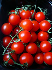 Tomate  Large Red Cherry  30  Samen - Solanum lycopersicum