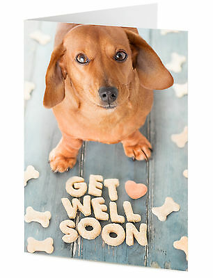 Get Well Cute Dachshund Sausage Dog