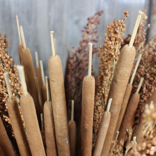 5St Getrocknete Blume Rohrkolben Spike Po Stick DIY Home Hochzeit Blumendekor