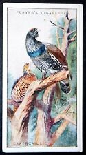 CAPERCAILLIE   Superb Vintage 1920's Colour Card  # VGC