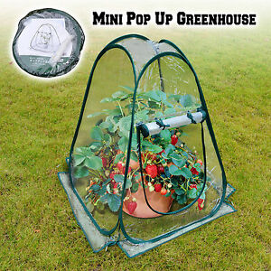 Peachy Details About 25X25X34 Mini Pop Up Greenhouse Outdoor Small Plant Gardening Green House Interior Design Ideas Philsoteloinfo
