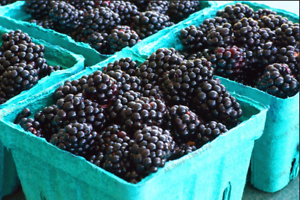 Thornless Blackberry Bonsai Delicious Sweet Perennial Garden Fruit 200 PCS Seeds