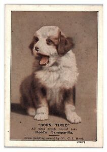 Puppy-Born-Tired-All-Tired-People-Should-Take-Hood-039-s-Sarsaparilla-Ad-Card