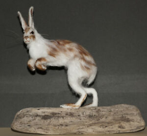 Hare, Snow Hare, Lievre - Needle Felted Animal Sculpture, OOAK, made to order