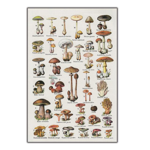 N-629 Mushroom Chart Biology Education Science Fabric POSTER 20x30 24x36