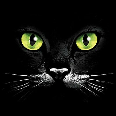Green Eyed Cat Face  Hoodie   Sizes/Colors
