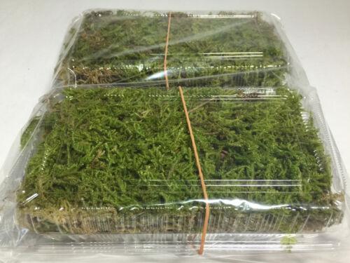 Natural Moss Ball Kokedama Making Kit 2 Set Made in Japan