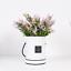 Cajas-de-flores-ramo-de-tipo-de-mano-redonda-Living-jarrones-floristeria-Flor-Planta-Cajas miniatura 7